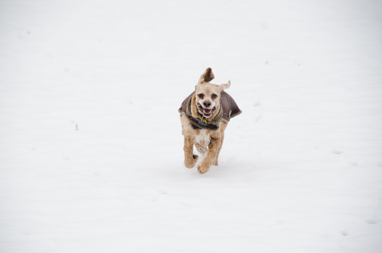 Chewy in the snow