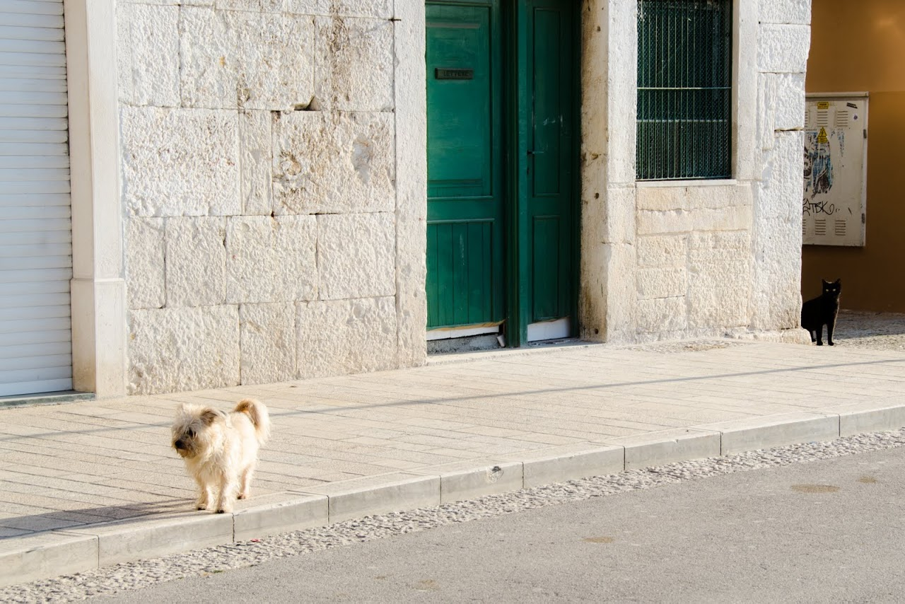 Cat looking at a dog in Rovinj