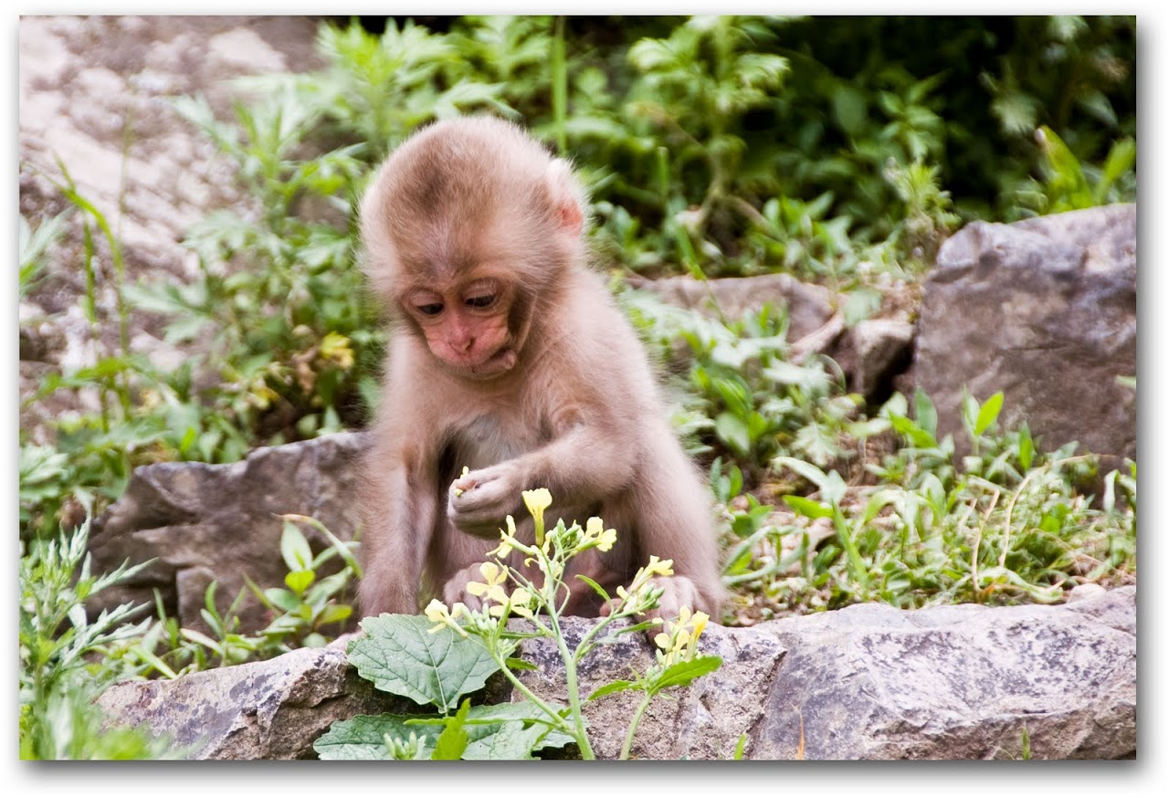 Baby monkey playing with flower