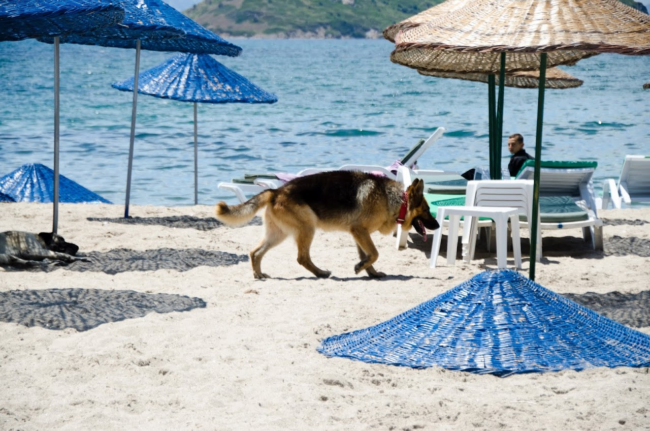 Dog at Bodrum beach