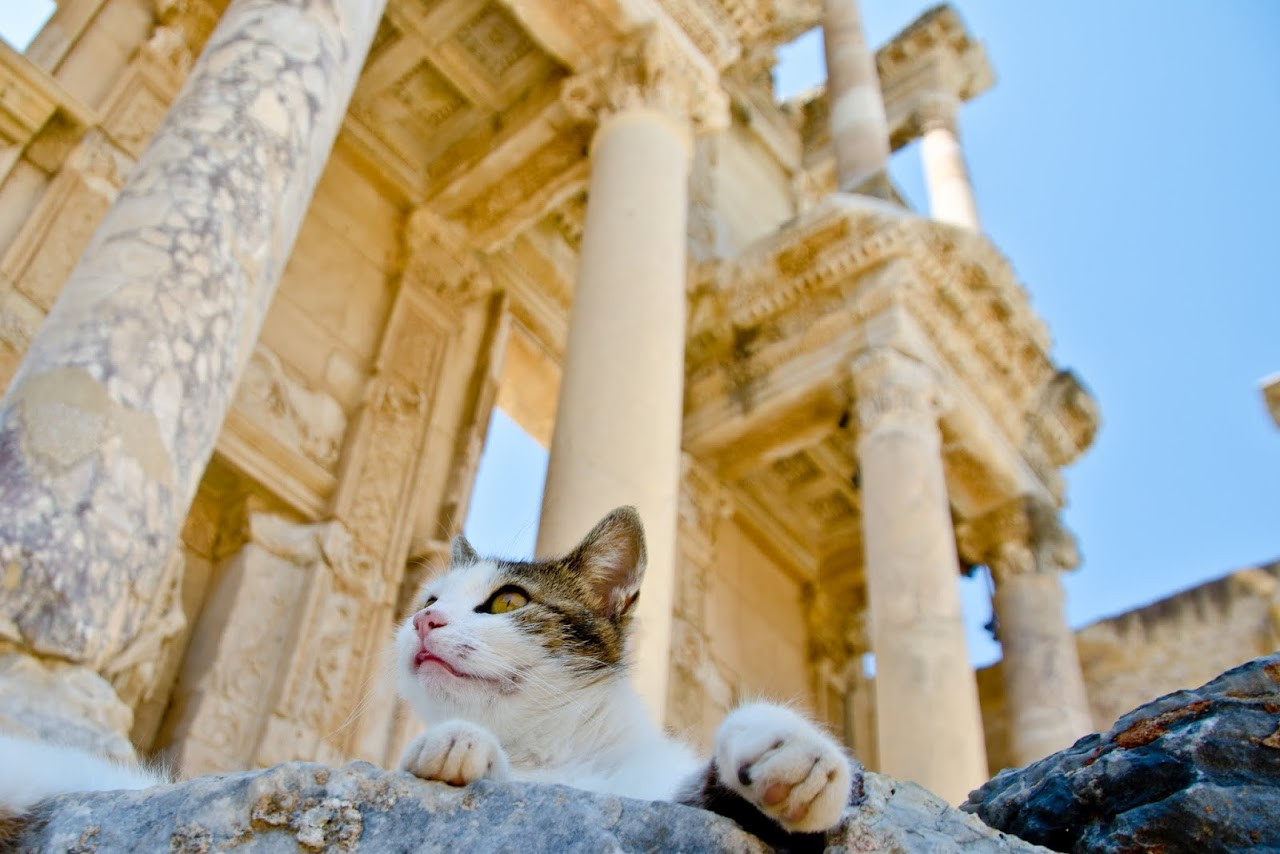 Cat in front of the Library of Selcuk in Ephesus