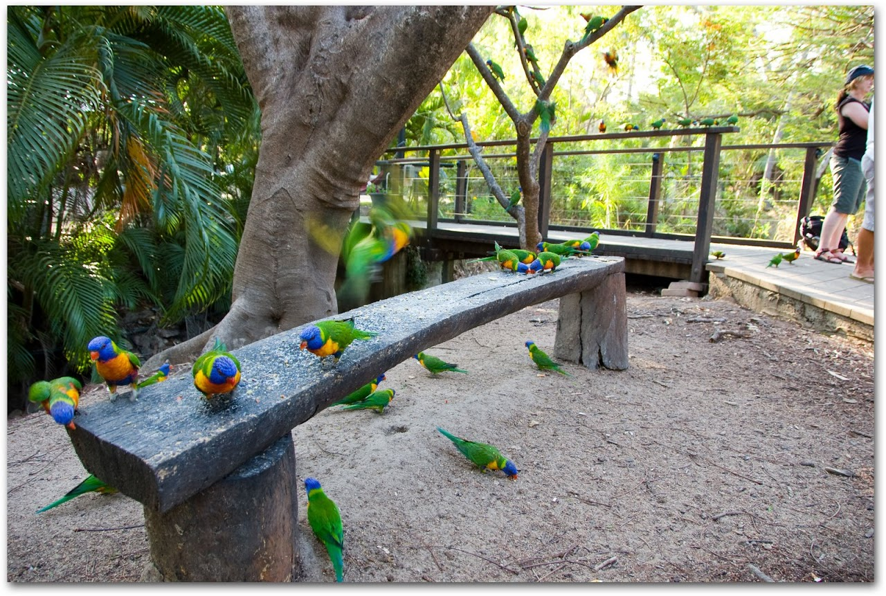 Lorikeets in garden at Bungalow Bay Village on Magnetic Island