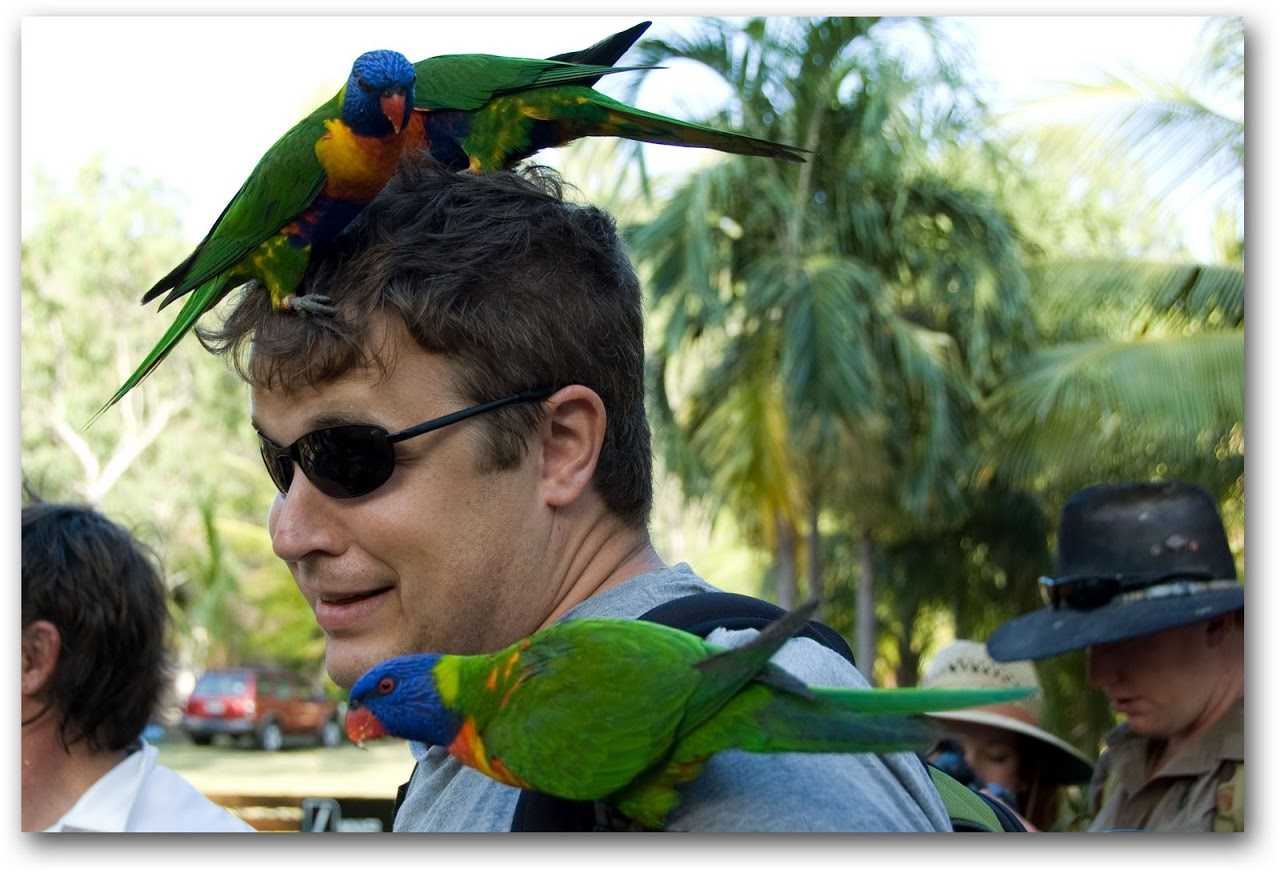 Lorikeets on Patrick's head