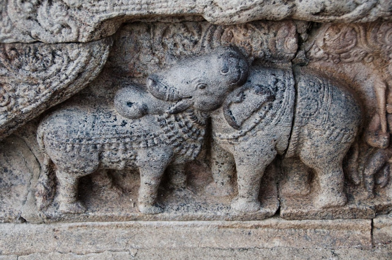 Bull and horse in Airavatesvara Temple